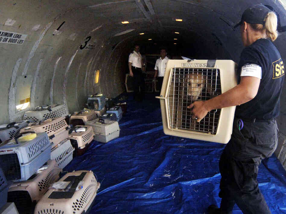 Transport of over 100 dogs rescued from Katrina