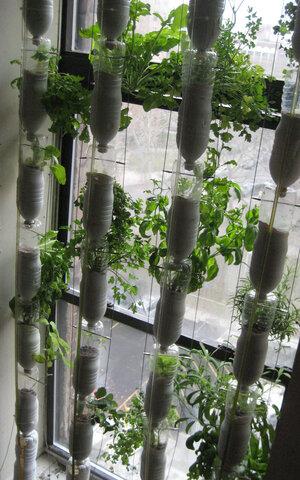 Window Farming: A Do It Yourself Veggie Venture
