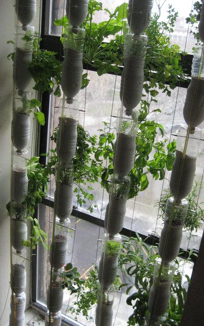 A window farm