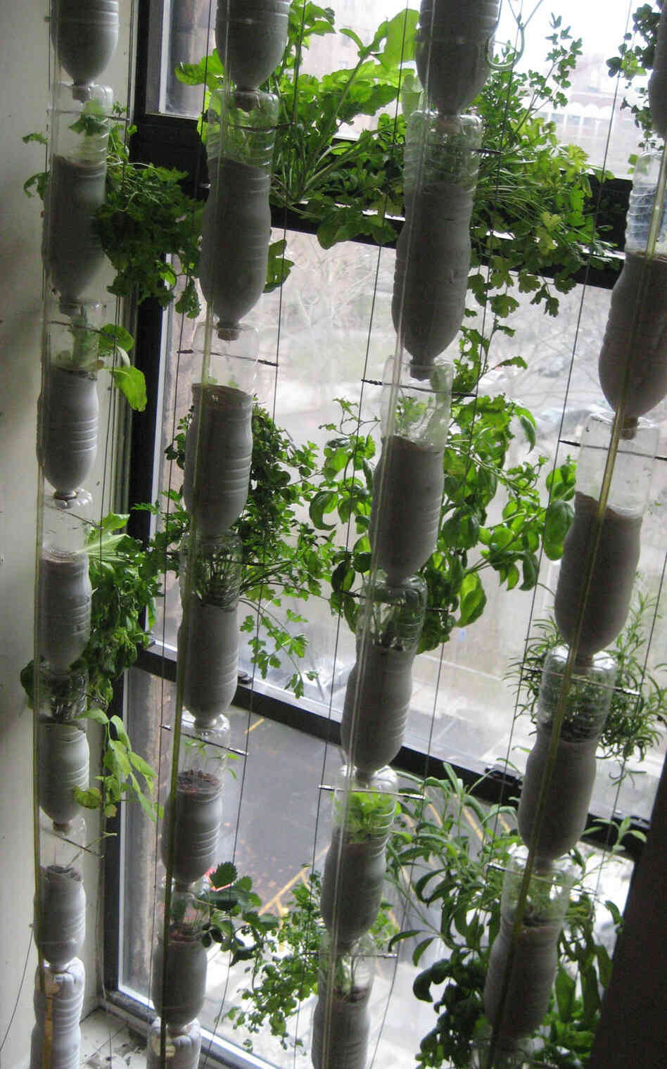 Window farming a do it yourself veggie venture npr for Garden window