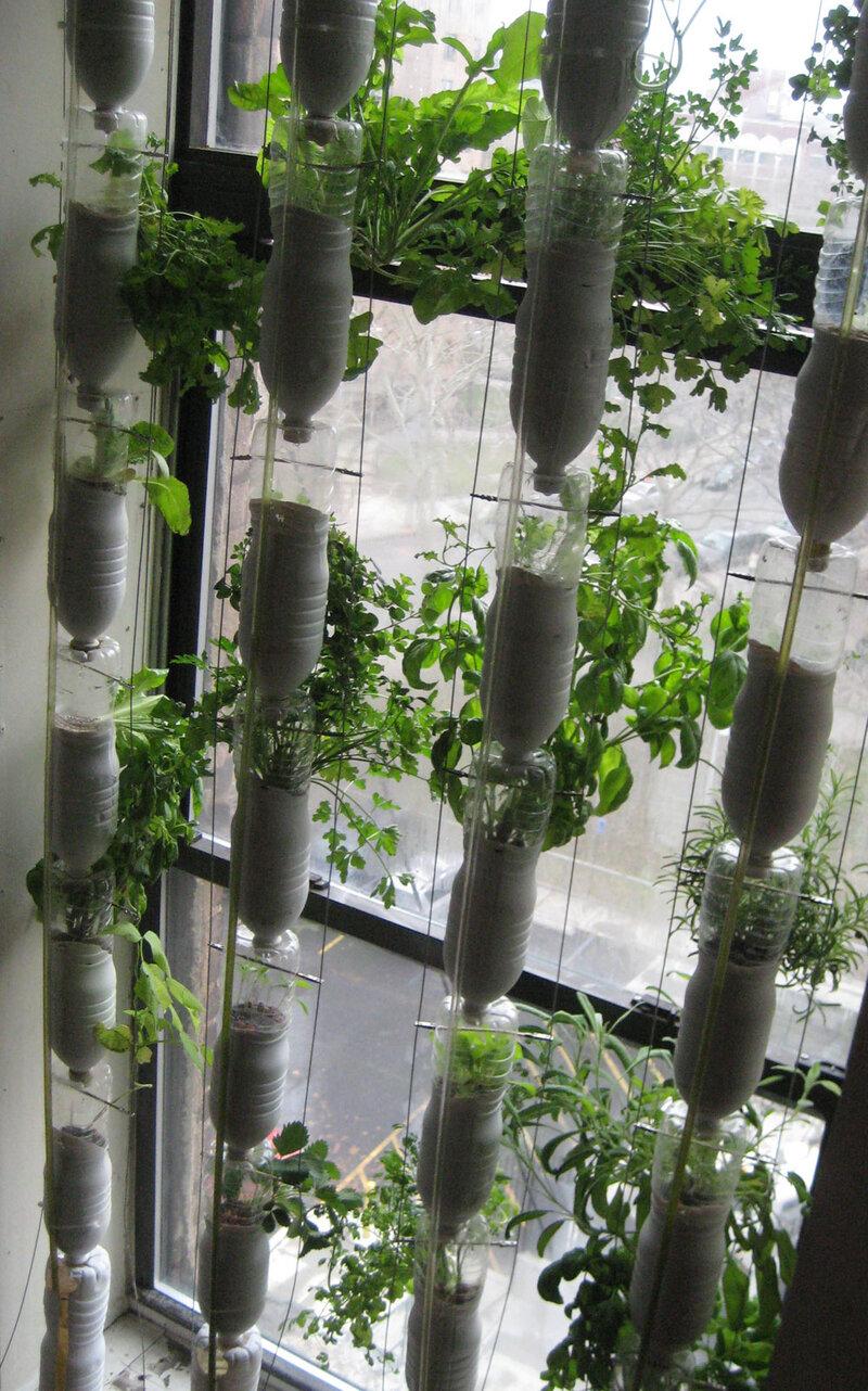 Window Farming A Do It Yourself Veggie Venture Npr