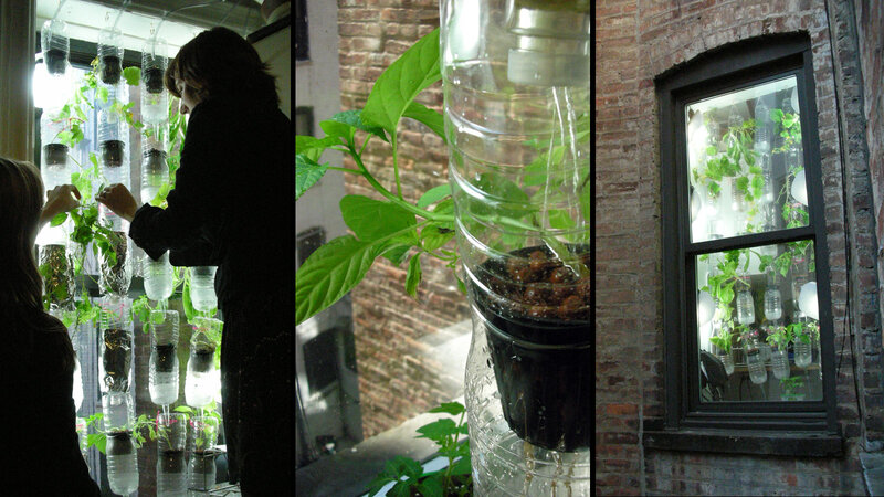 The first window farm in Brooklyn, from the inside and from the outside.