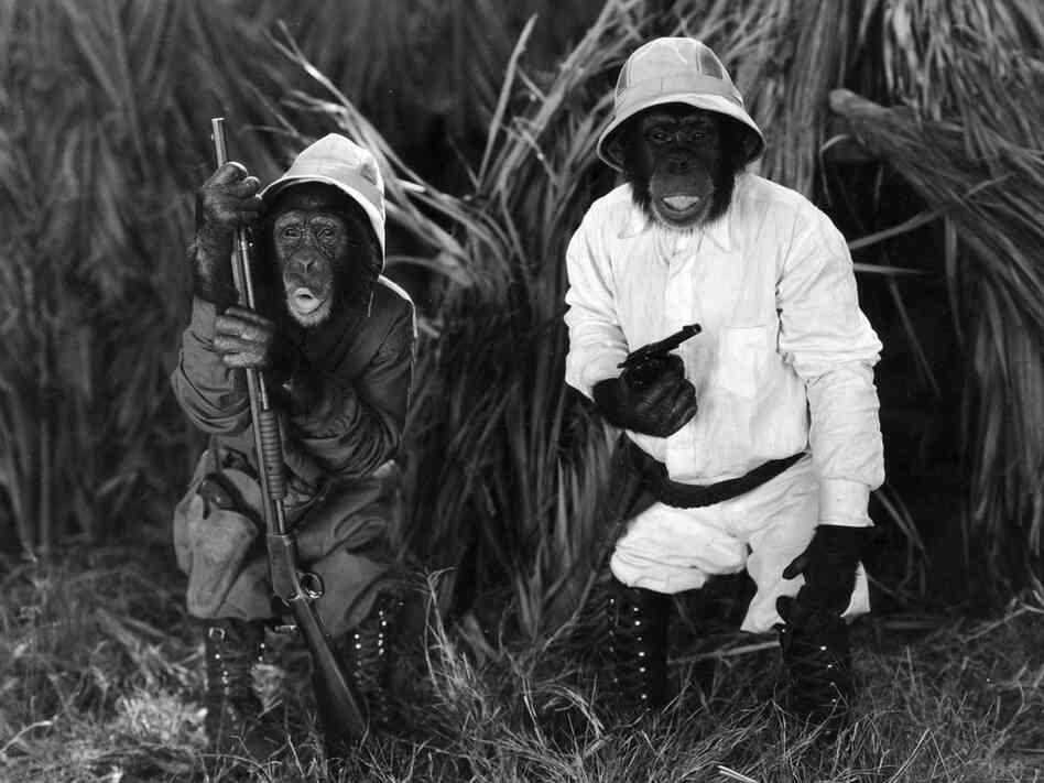 the moviestar chimpanzees retirement plan npr