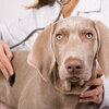 Dog receiving checkup