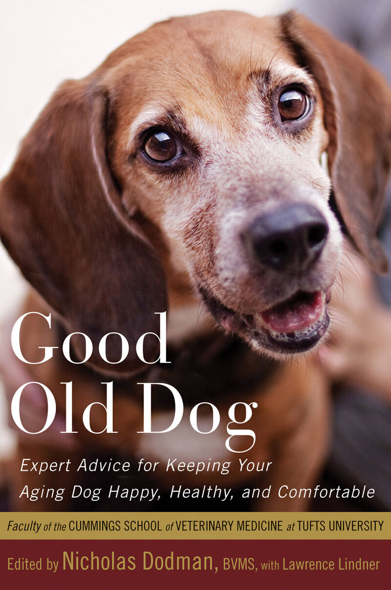 Helping Your 'Good Old Dog' Navigate Aging : NPR