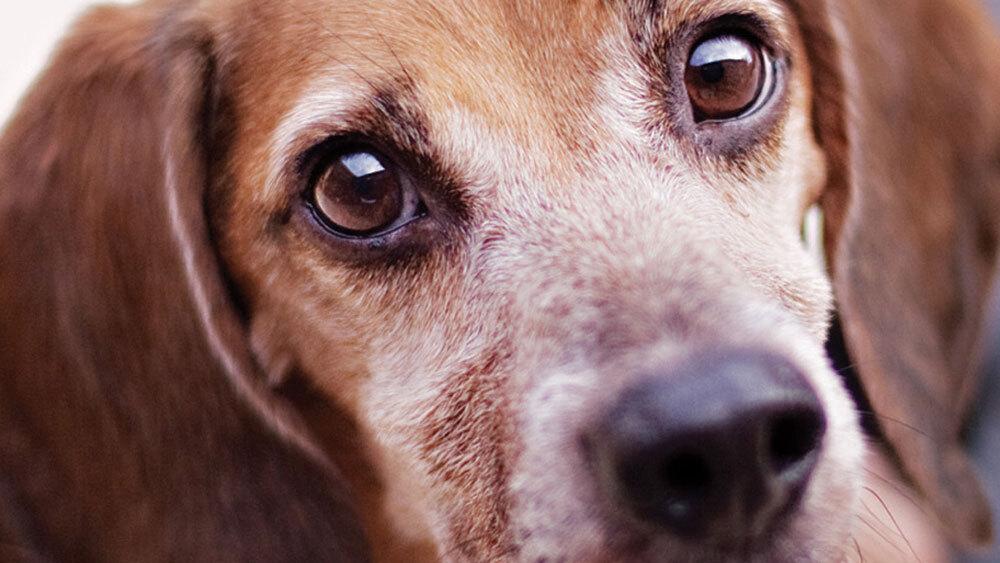 Helping Your 'Good Old Dog' Navigate Aging : NPR