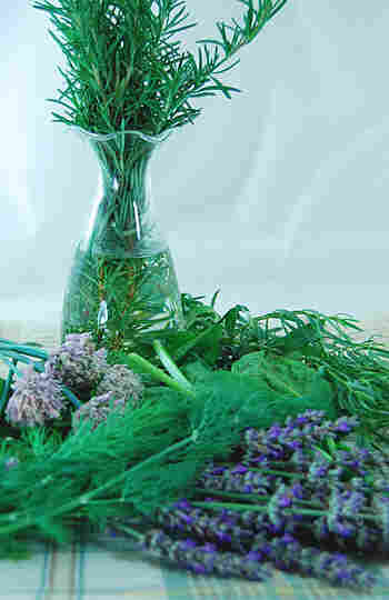 Bunches of various herbs are strewn on a table cloth