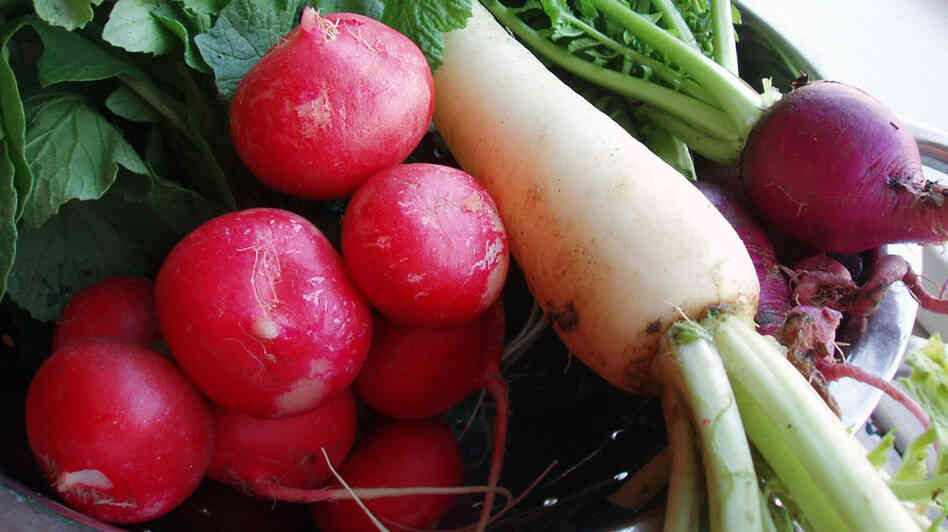A bowl full of red, white and purple radishes