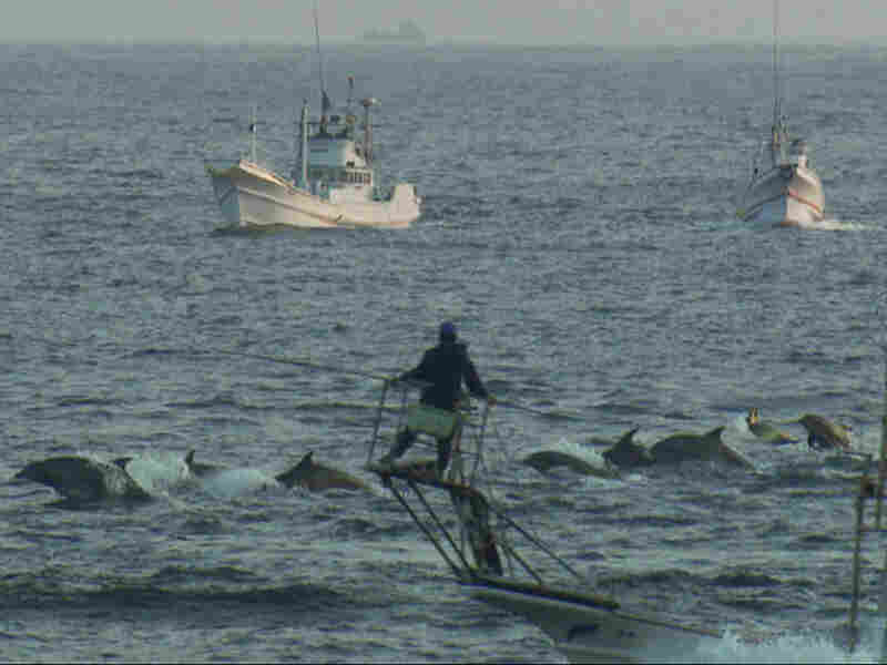 Japanese fishermen drive dolphins into the cove for capture or slaughter.