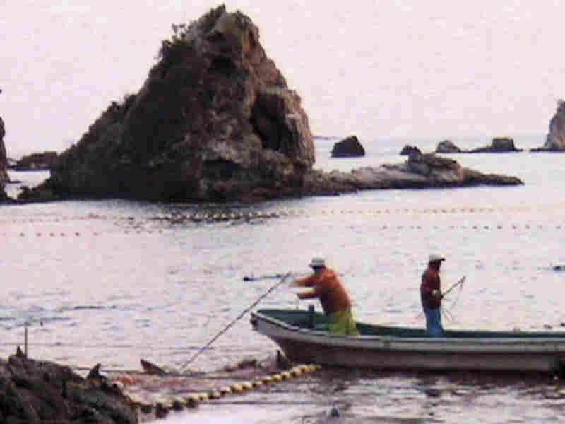 Fisherman in Taiji, Japan