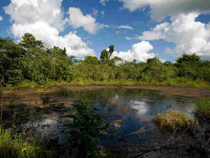 A lake of oil in Ecuador