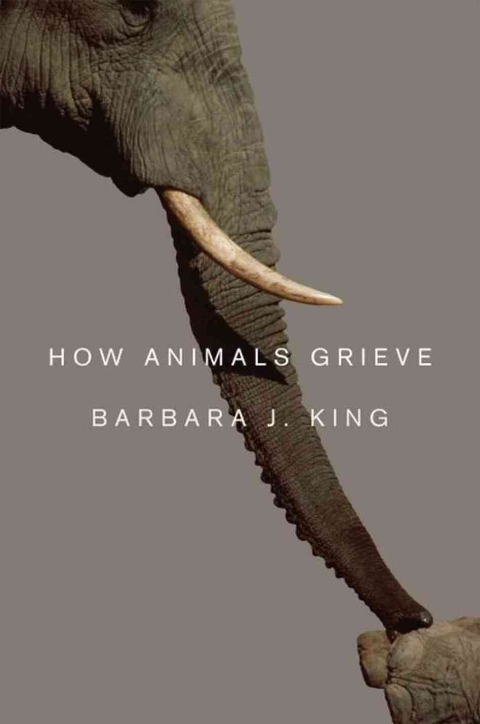Questions For Barbara King, Author Of 'How Animals Grieve'