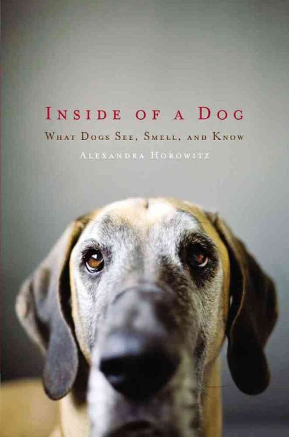 Inside of a Dog