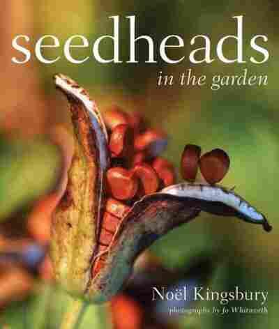 Seedheads in the Garden
