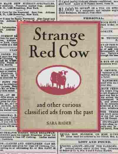 Strange Red Cow