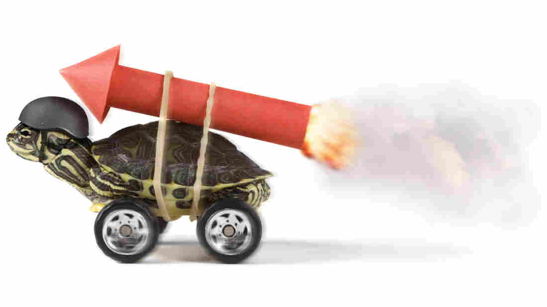 A turtle with a rocket.