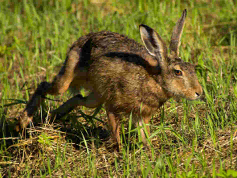 Sen. Conrad says it's time to stop chasing the public-option rabbit.