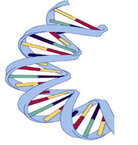 A piece of DNA.