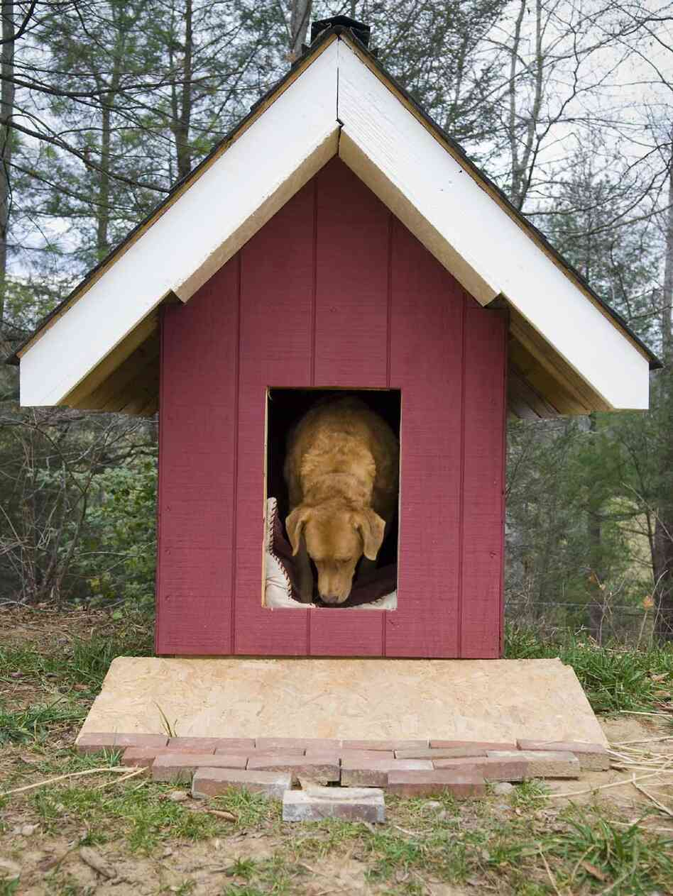 dog in the dog house.