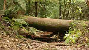 a tree blocks a path