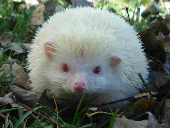 Harriet the hedgehog.