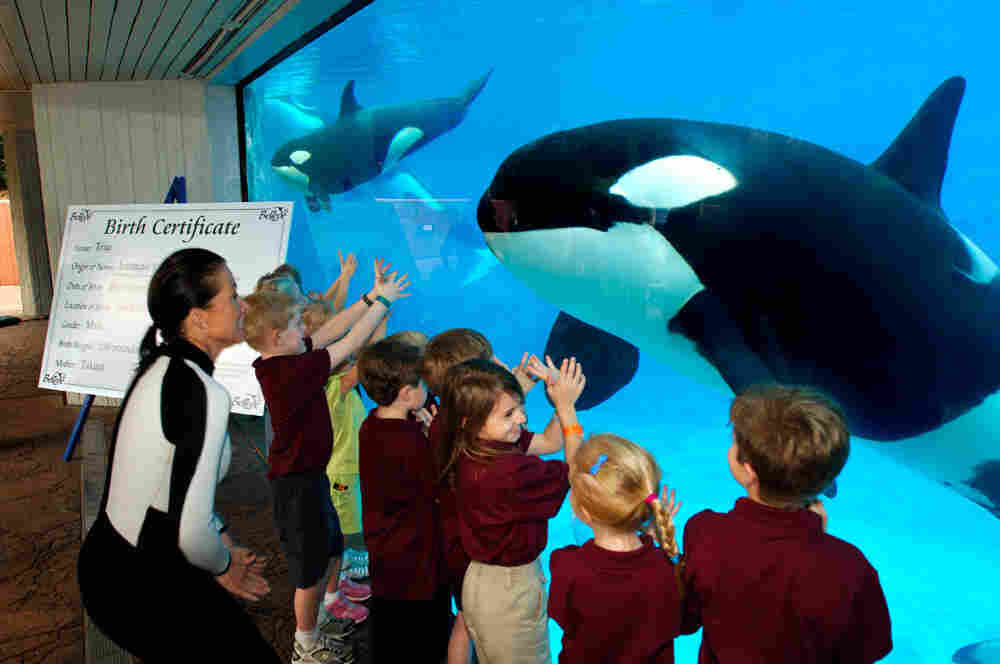 A killer whale killed its trainer at Orlando's SeaWorld.