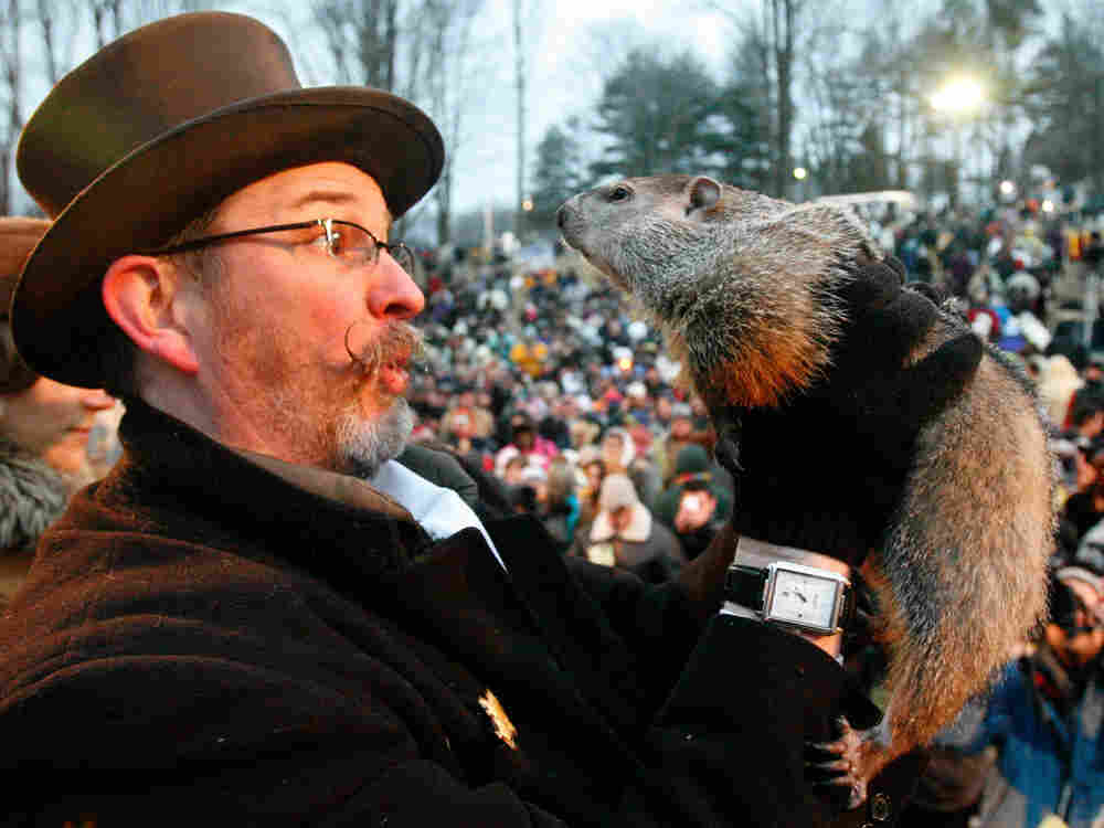 Groundhog Day: Punxsutawney Phil, right, is held by Ben Hughes after emerging from his burrow on Gob