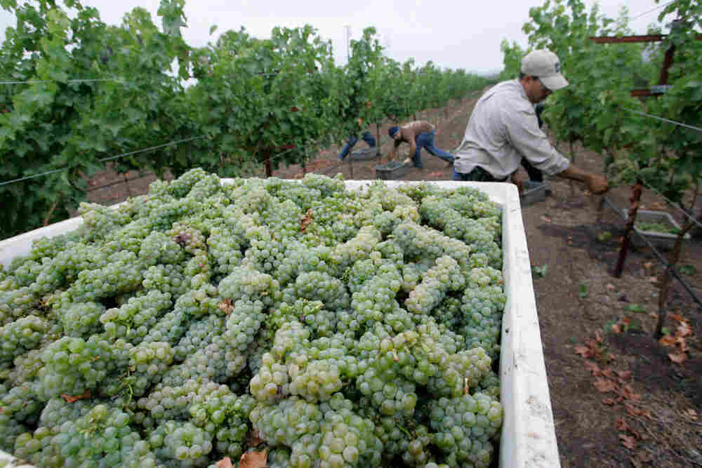 Some of Napa Valley's vineyards are being driven to foreclosure by falling land values and consumers