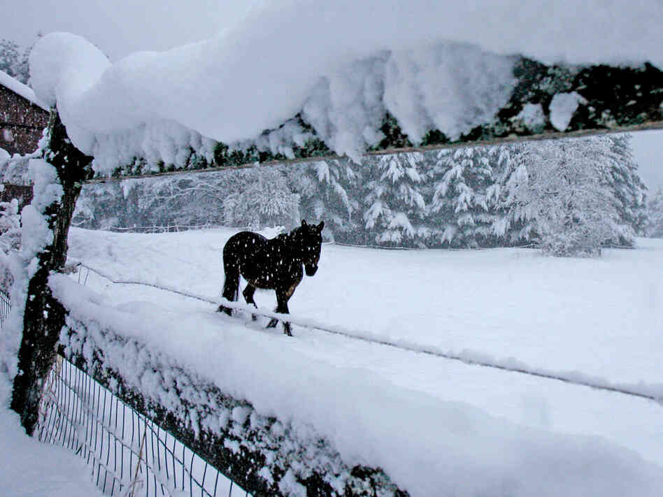 A horse is seen through a snow-covered fence in a pasture in Calais, Vt., Wednesday, April 28, 2010.