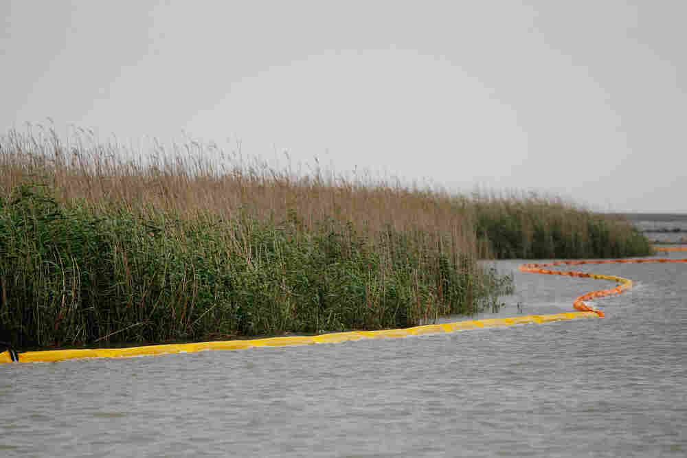 Oil booms line the waters around around the wetlands near the Southpass of the Mississippi River on