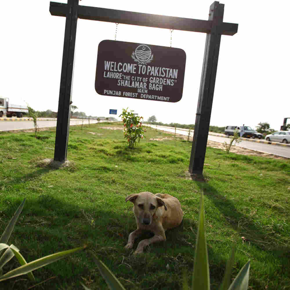 A stray dog sits in the shade of a sign that welcomes visitors on the Pakistani side of the Wagah bo