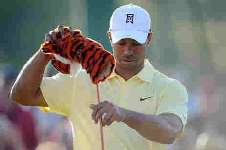 Image of Tiger Woods putting plush tiger club cover on.