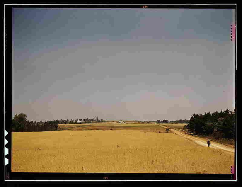 The Jackson farm, vicinity of White Plains, Ga.  By Jack Delano, June 1941.