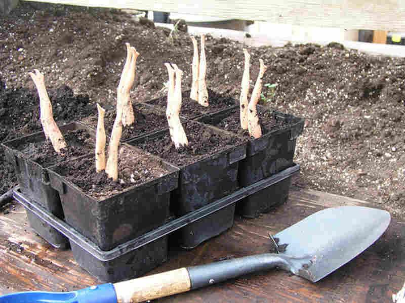 """Grow worms"" uploaded by dawnduaneevans/Flickr"