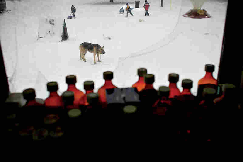 Viewed through a collection of medicine bottles lining the Sellers' window, Hercules crouches to watch the children playing in the snow. The Sellers struggle with an assortment of health problems. Most of their children have asthma and twins Kacey and Lacey, 5, were born profoundly deaf.