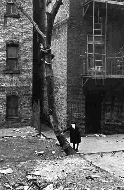 Kid in tree with mask, New York, circa 1940
