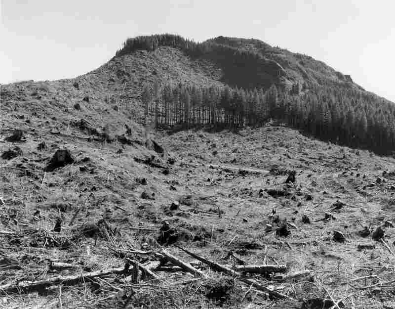 Clearcut, Humbug Mountain, Clatsop County, Ore., 1999-2001.
