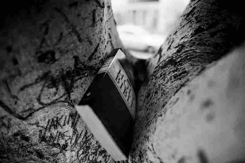 A Bible is hidden between the branches of a tree on San Pedro Street.