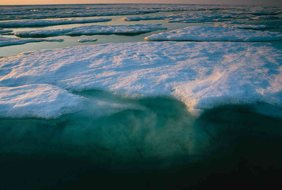This ice, off the coast of Kaktovik, Alaska, is a few yards thick (most is below the surface) and is typical of ice in the late summer, with plentiful freshwater melt ponds on the surface.  But floes this thick are becoming more and more rare.