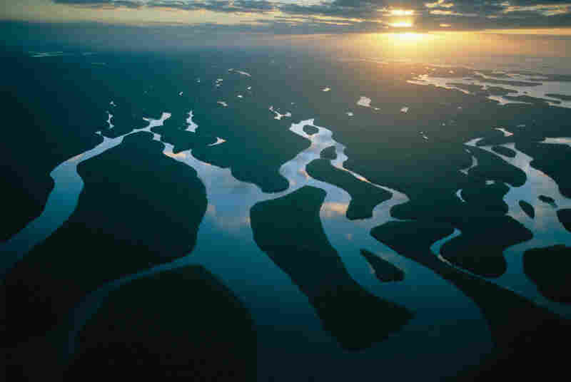 The outflow region of the Everglades in Florida is a typical example of a coastal wetland comprising mangrove swamps.  It provides a unique environment for the species that live there. But with the projected increase in the current rise of sea level, wetlands are at risk of being inundated and eventually lost.