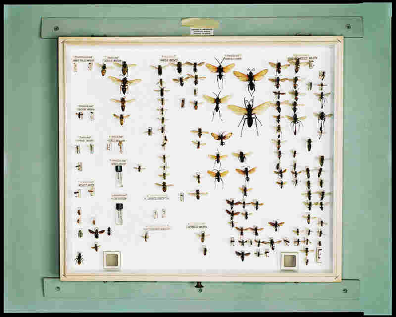 The Hymenoptera Box of the Late George Merriken, Rancher, Citrus Grower, and Amateur Entomologist, Fillmore, Calif., July 22, 2000