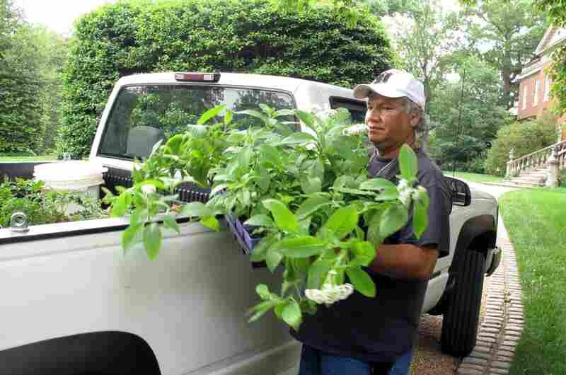 Crew leader Rigoberto Castellon, an émigré from El Salvador, has been a gardener at Dumbarton Oaks for more than 20 years.