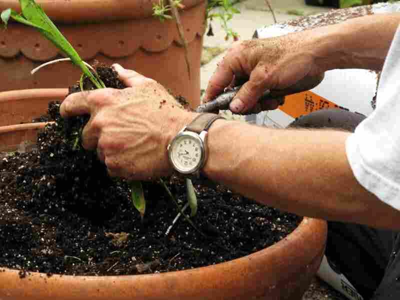 Gardener Donald Mehlman prepares a terra cotta pot for planting.