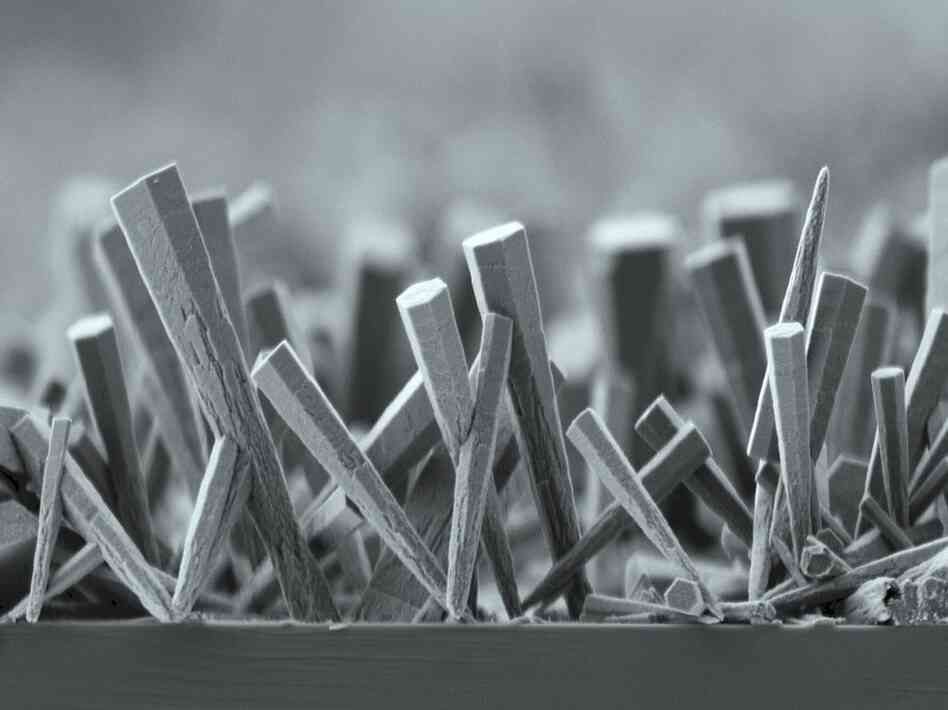 A Forest Of Zinc Oxide Nanorods: Nano-sized structures like these are being studied for pot