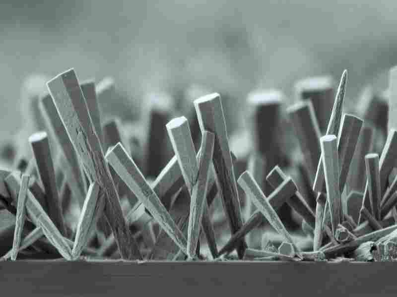 A Forest Of Zinc Oxide Nanorods: Nano-sized structures like these are being studied for potential application in solar cells. An equipment malfunction in an experiment gave these rods a distinctive club shape. This image was captured using a scanning electron microscope.