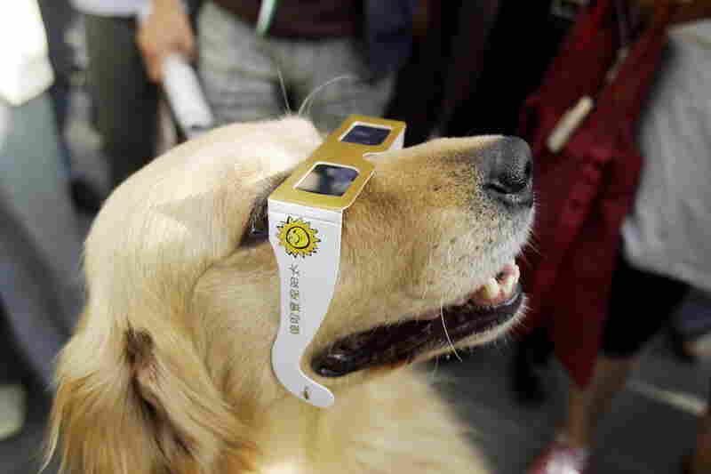 A dog looks through a pair of special glasses in Kunming in southwest China.
