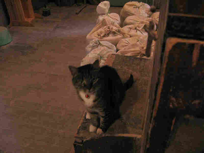 Saint Brecca is a mousing cat kept and adored by all the Gristmill. Pictured behind her are bags of freshly ground flour.