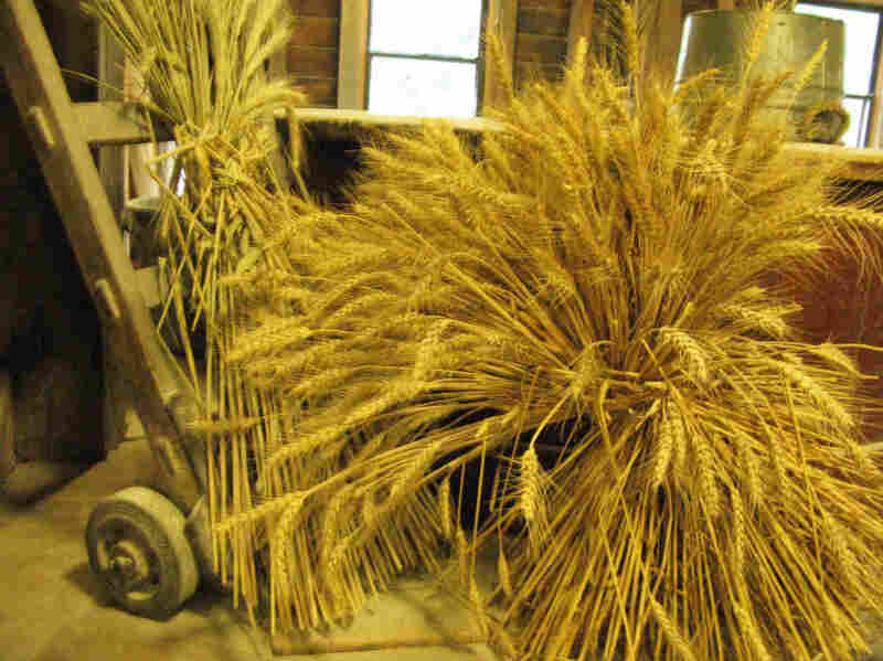 Wheat awaits grinding in the Saint Vincent Gristmill.