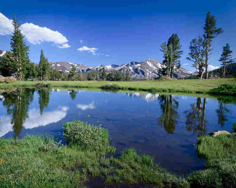 Yosemite National Park is home to some of the most beautiful natural scenery. Closed to auto traffic during the winter months, Tuolumne Meadows becomes a feast for eyes and cameras when the snow melts.