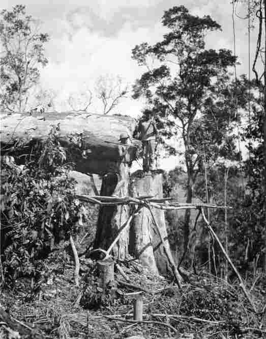"""Workers chop down a tree in Fordlandia. Greg Grandin, author of """"Fordlandia,"""" claims that the complex ecological conditions and a clash of cultures between the Americans and native workers ultimately led to the failure of the project."""